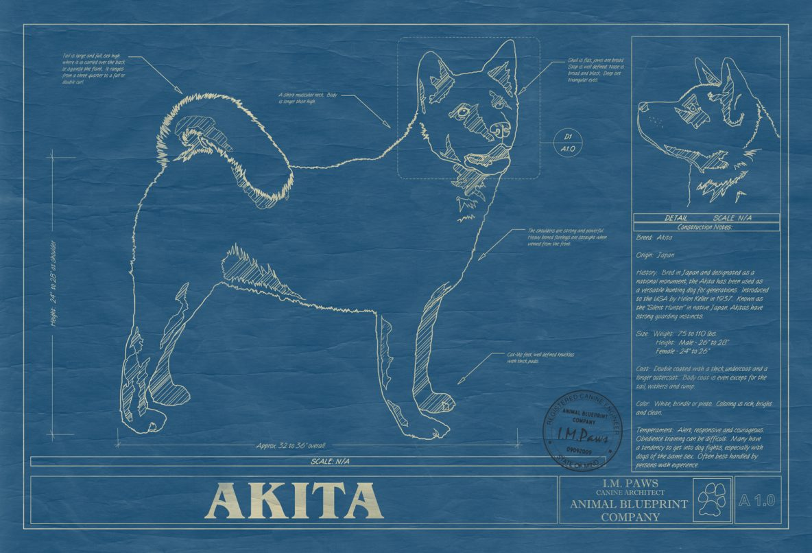 A b archives animal blueprint company akita dog blueprint malvernweather Images