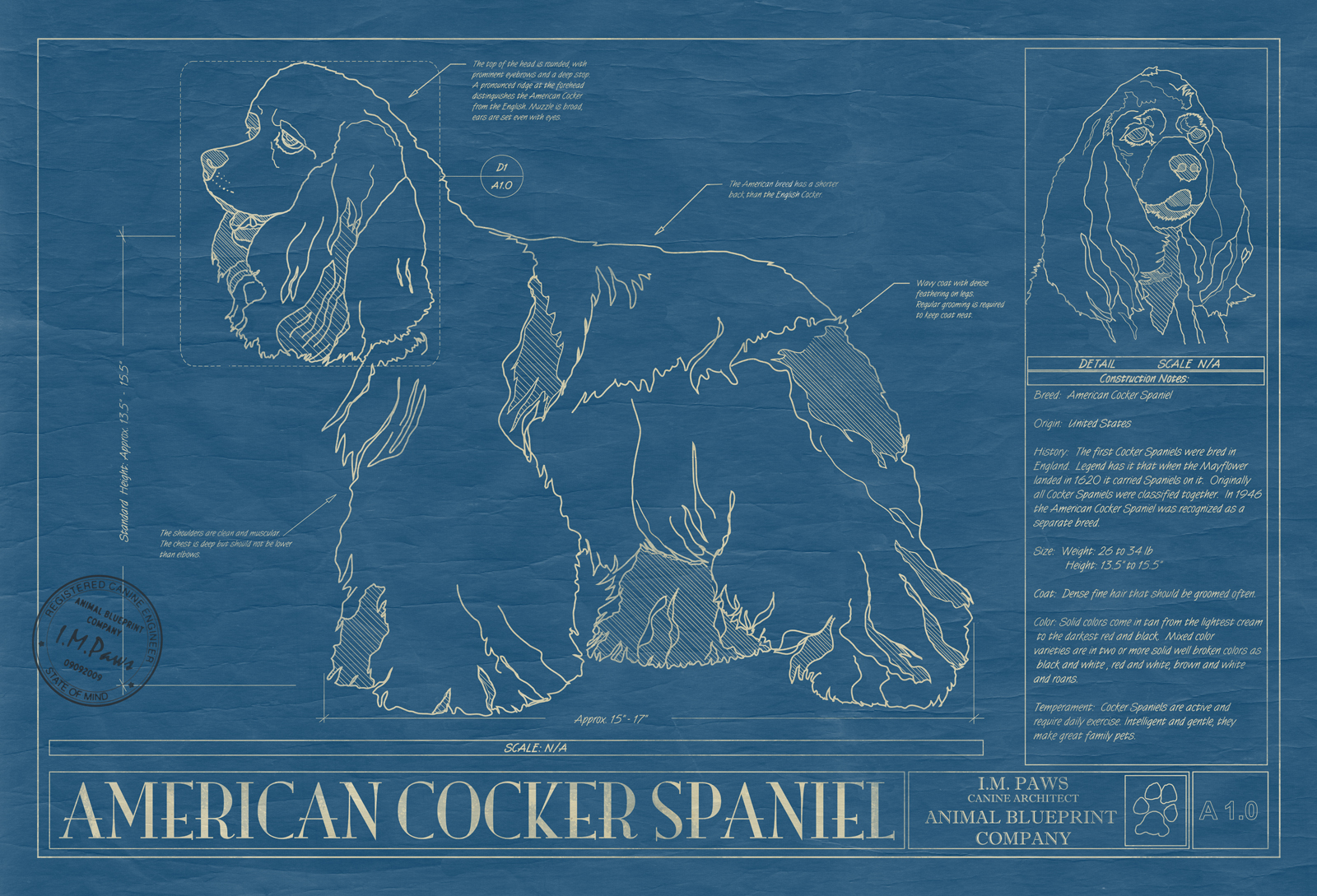 Cocker spaniel american animal blueprint company american cocker spaniel dog blueprint malvernweather Images