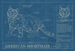 American Shorthair Cat Blueprint
