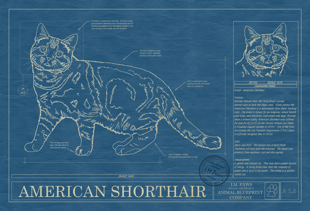 American Shorthair Cat Blueprint