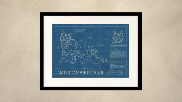 American Shorthair Cat Wall Blueprint