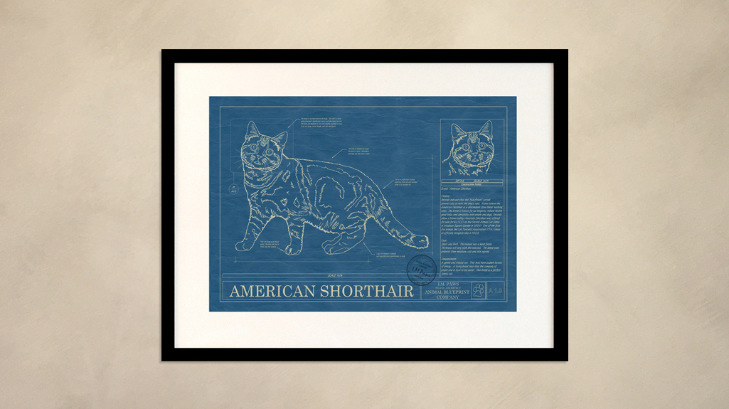 American shorthair animal blueprint company american shorthair cat wall blueprint malvernweather Images