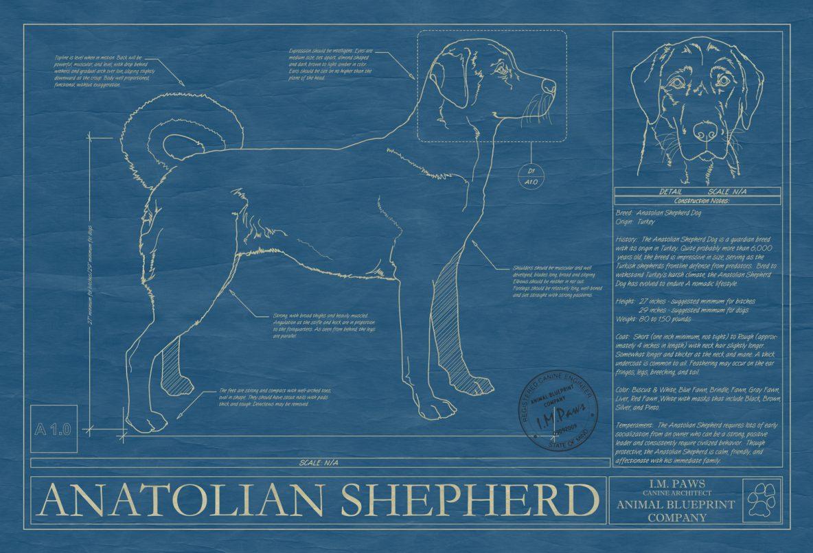 Anatolian Shepherd Dog Blueprint