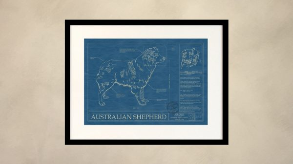 Australian Shepherd Dog Wall Blueprint