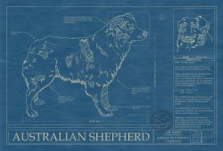 Australian Shepherd Dog Blueprint