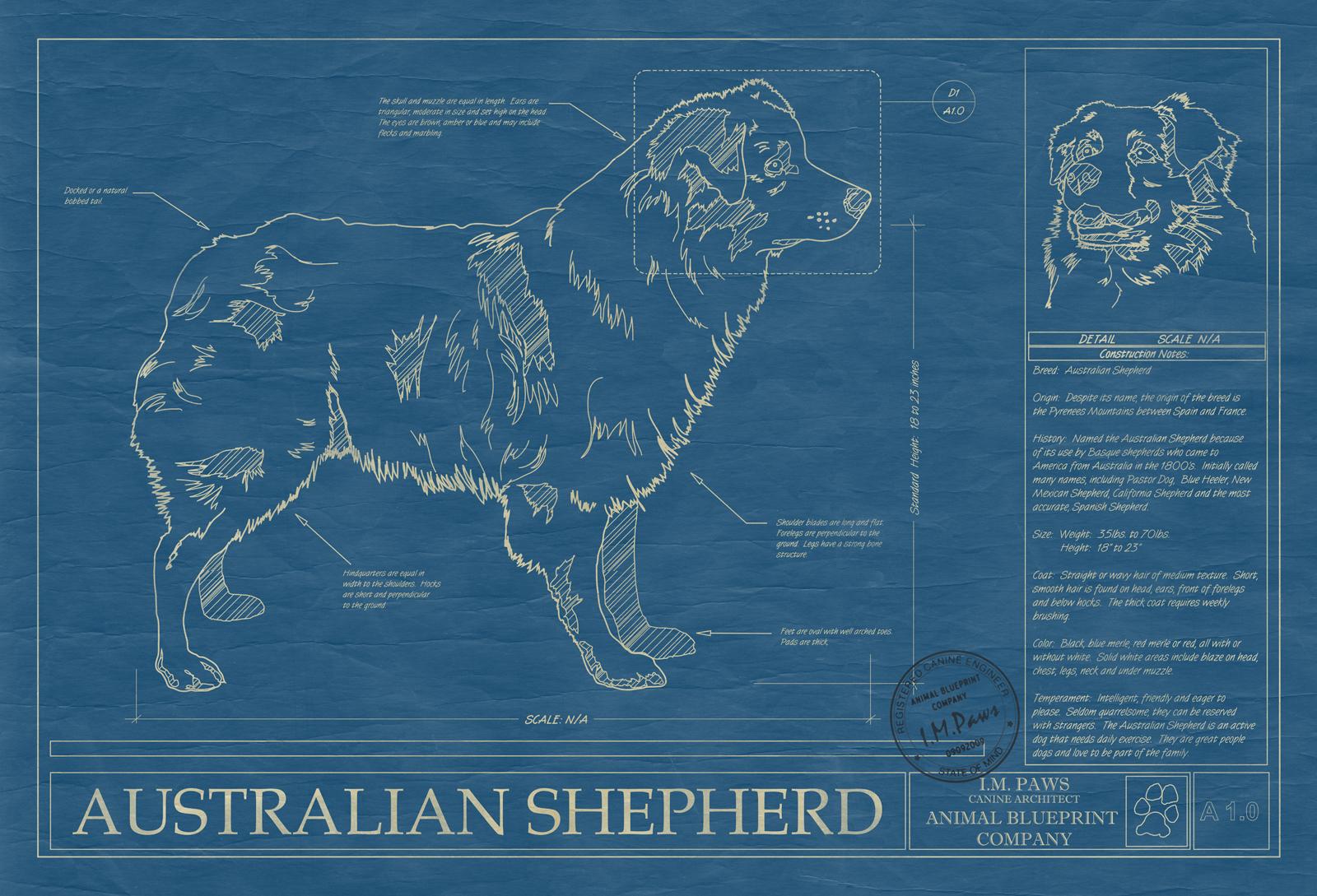 Australian shepherd animal blueprint company australian shepherd dog blueprint malvernweather Gallery