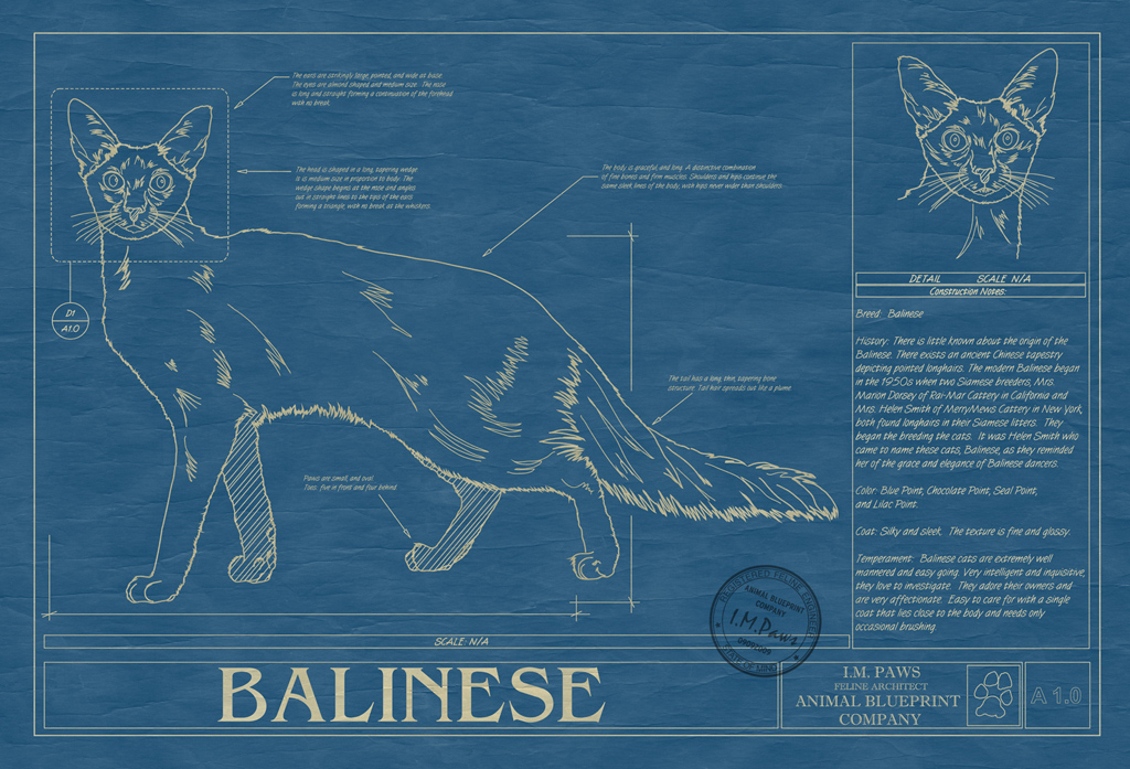 Balinese Cat Blueprint