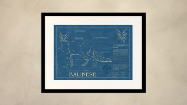 Balinese Cat Wall Blueprint