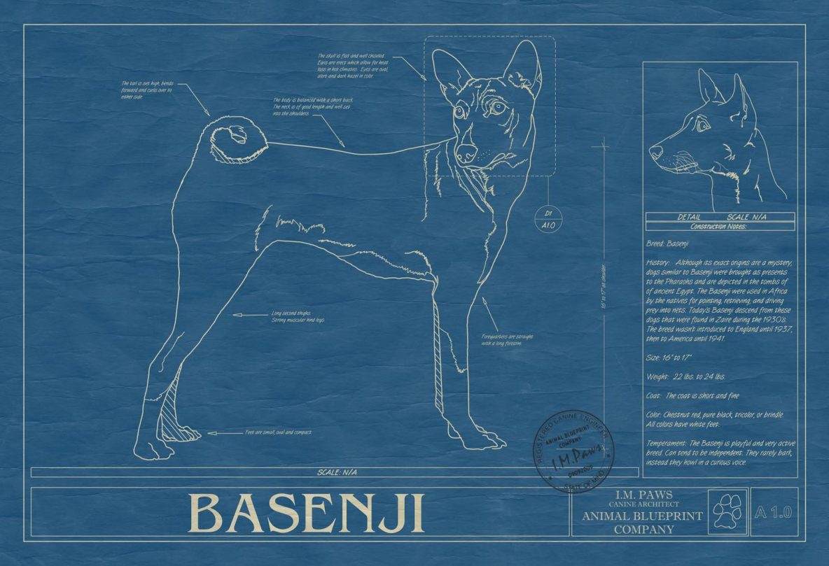 Basenji Dog Blueprint