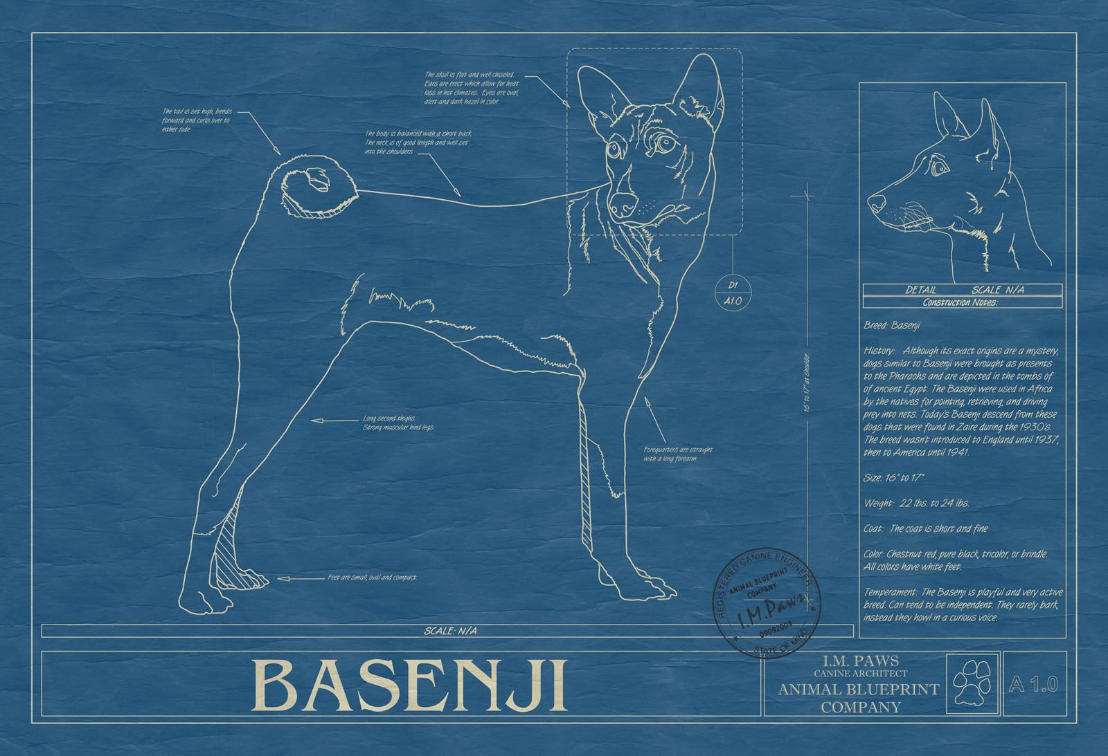 Basenji dog animal blueprint company basenji dog blueprint malvernweather Choice Image
