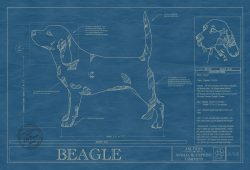 Beagle Dog Blueprint