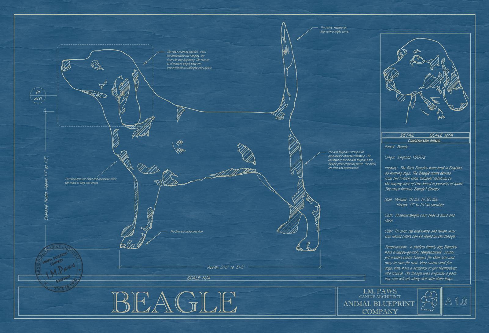 Beagle animal blueprint company beagle dog blueprint malvernweather Choice Image