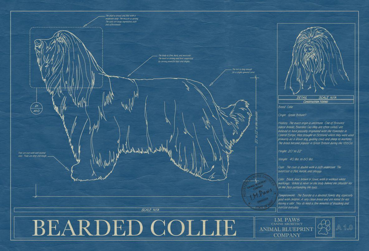 Dog blueprints archives animal blueprint company bearded collie dog blueprint malvernweather Images