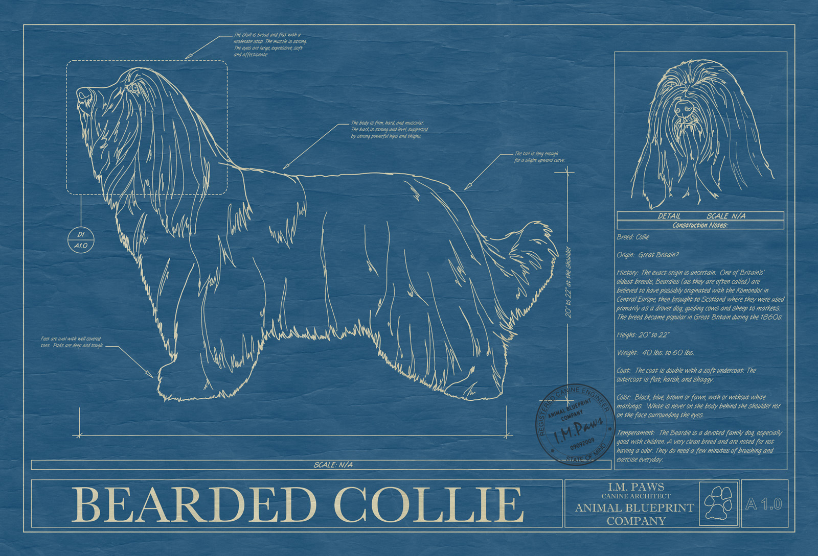 Bearded collie animal blueprint company bearded collie dog blueprint malvernweather Gallery