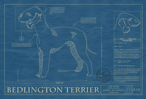 Bedlington Terrier Dog Blueprint