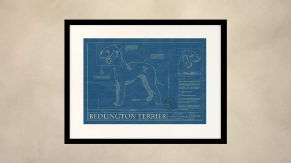 Bedlington Terrier Dog Wall Blueprint