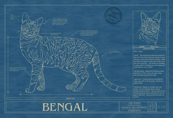 Bengal Cat Blueprint