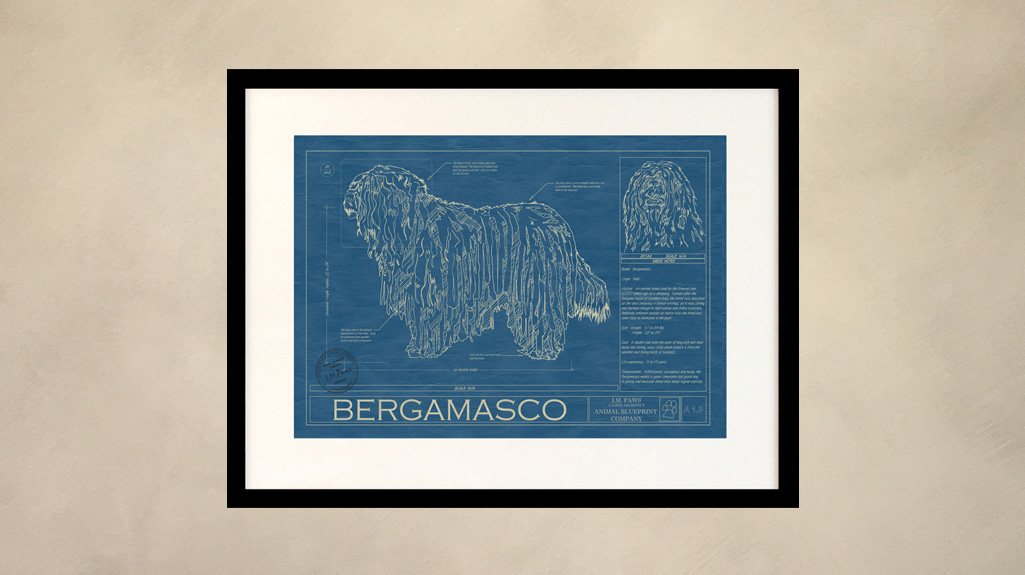 Bergamasco Dog Wall Blueprint