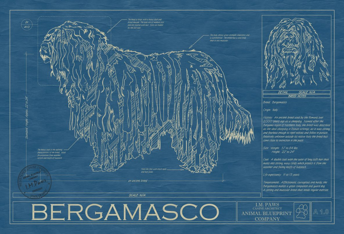 Bergamasco Dog Blueprint