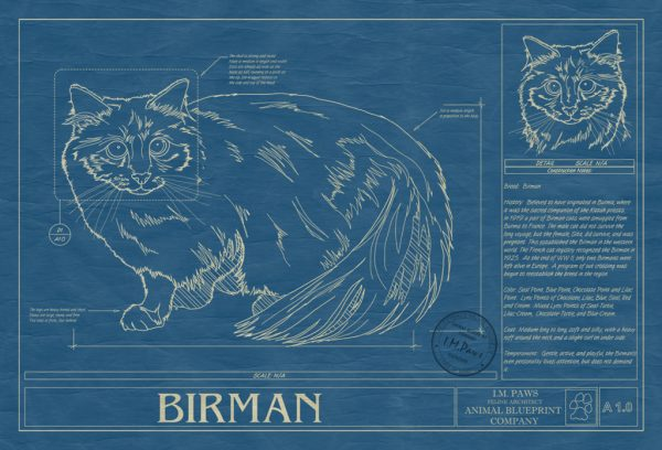 Birman Cat Blueprint
