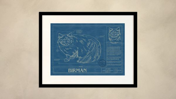 Birman Cat Wall Blueprint