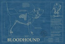 Bloodhound Dog Blueprint