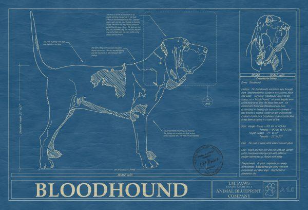 Bloodhound Dog Blueprint