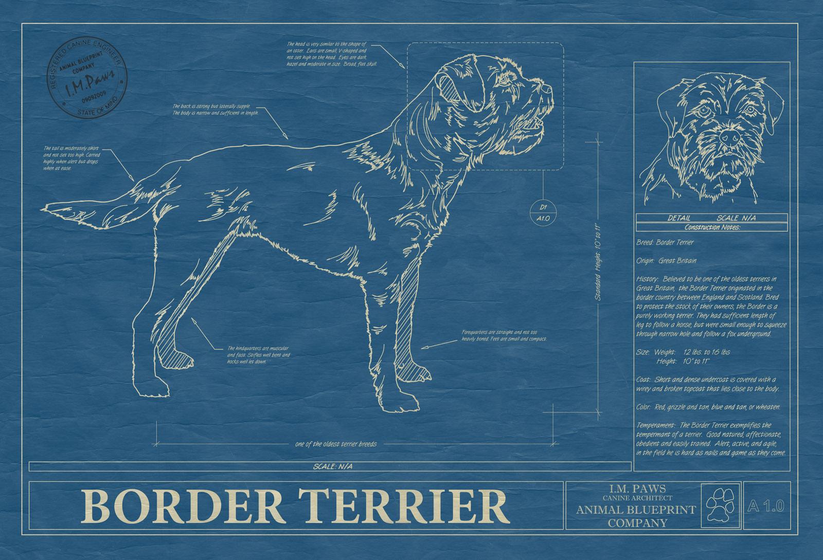 Border terrier animal blueprint company border terrier dog blueprint malvernweather Image collections
