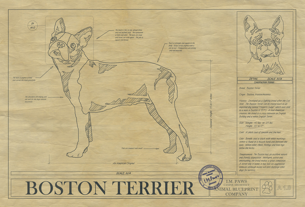 Boston Terrier Dog Drawing