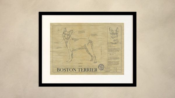 Boston Terrier Dog Wall Drawing