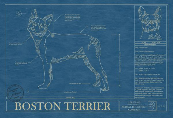 Boston Terrier Dog Blueprint