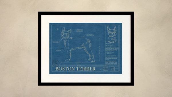 Boston Terrier Dog Wall Blueprint
