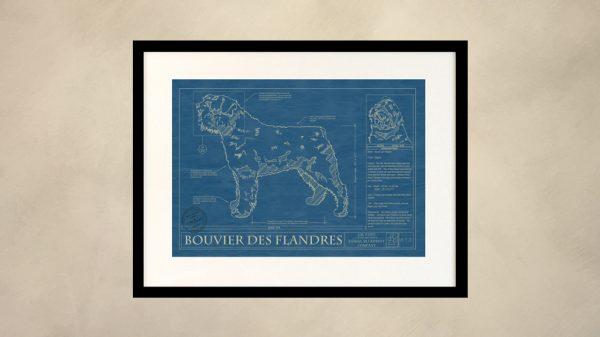 Bouvier Des Flandres Dog Wall Blueprint