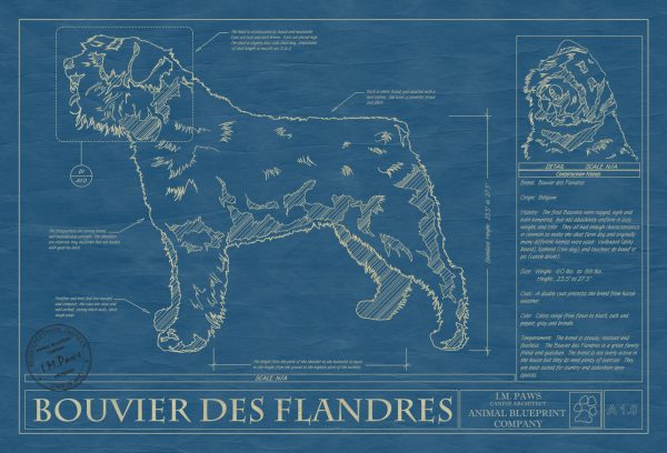 Bouvier Des Flandres Dog Blueprint