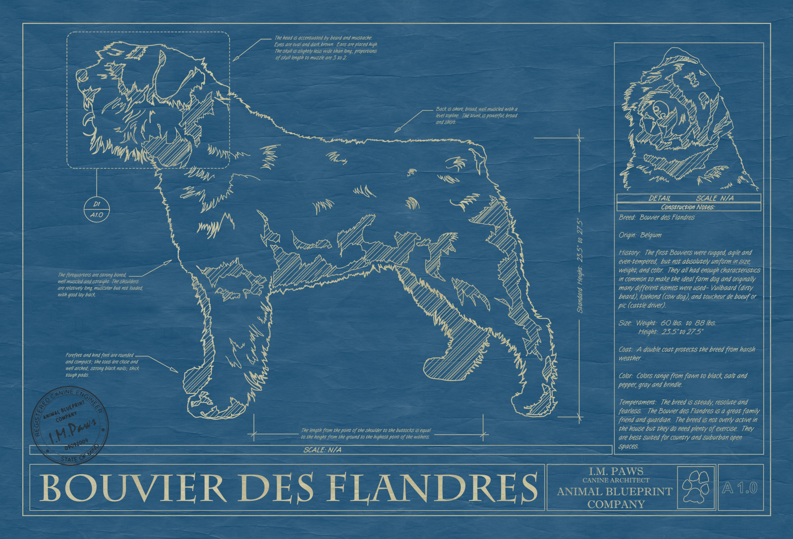 Bouvier des flandres animal blueprint company bouvier des flandres dog blueprint malvernweather Gallery