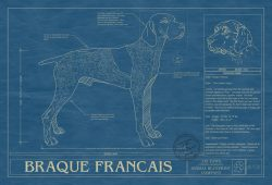 Braque Francais Dog Blueprint