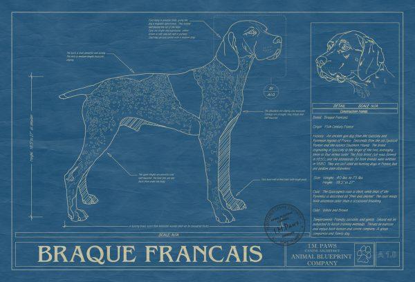 Braque Francais Dog Blueprint