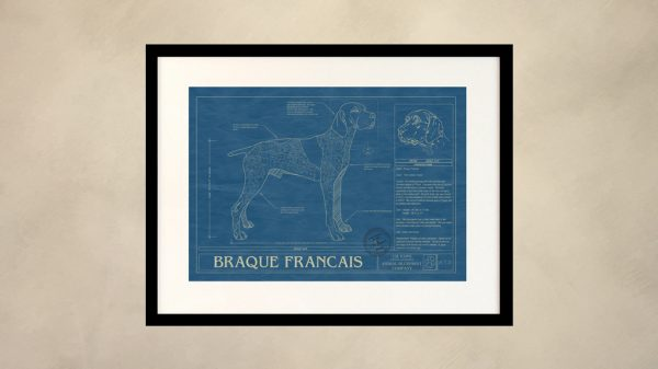 Braque Francais Dog Wall Blueprint