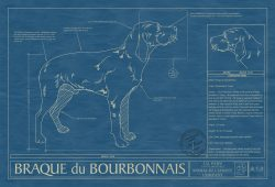 Braque du Bourbonnais Dog Blueprint