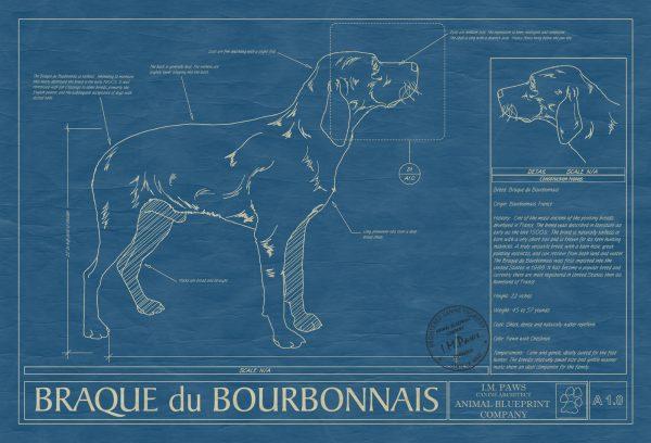 Braque du Bourbonnais Dog Blueprint