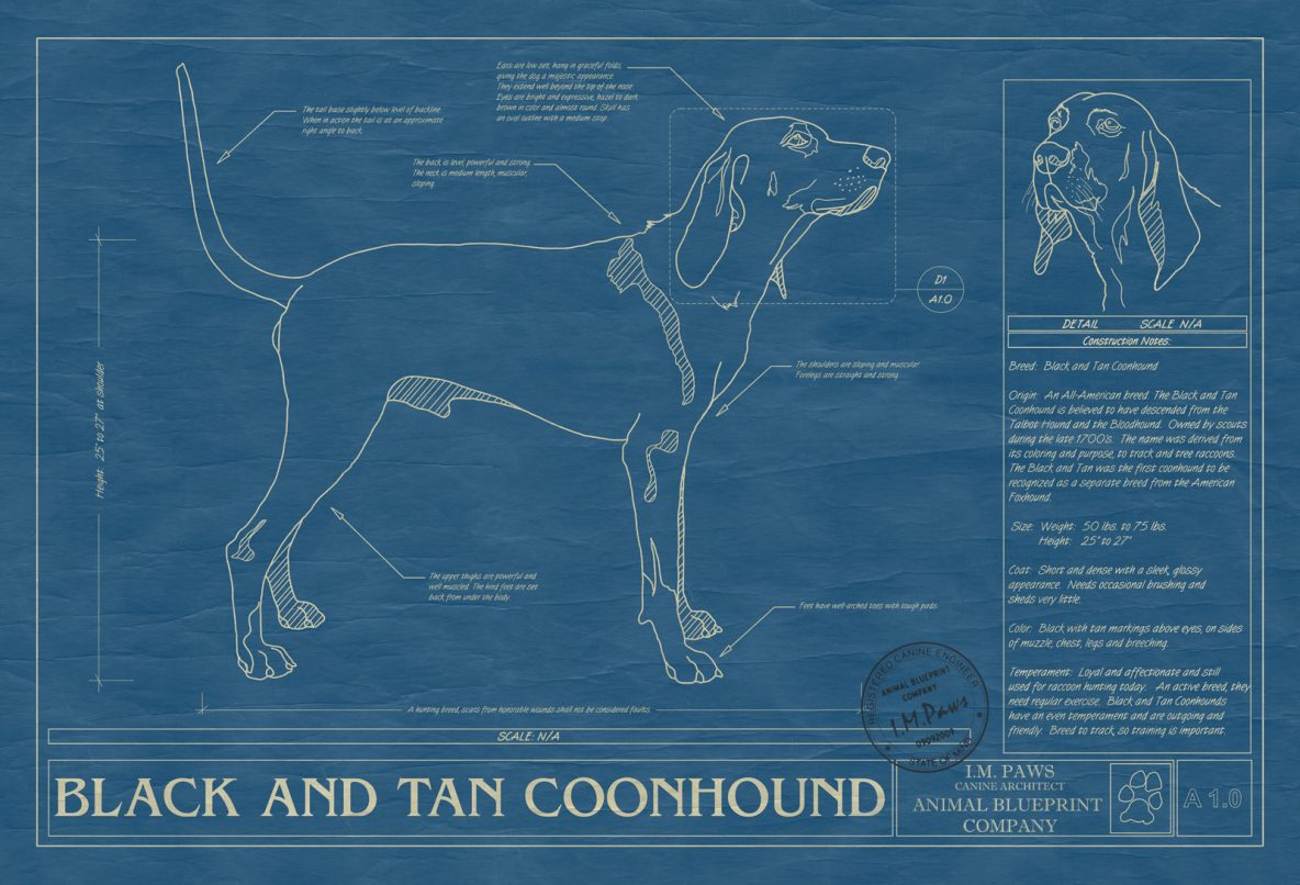 Black and Tan Coonhound Dog Blueprint