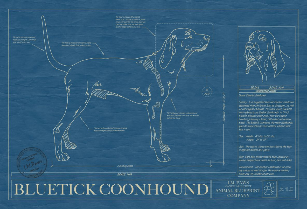 Bluetick Coonhound Dog Blueprint