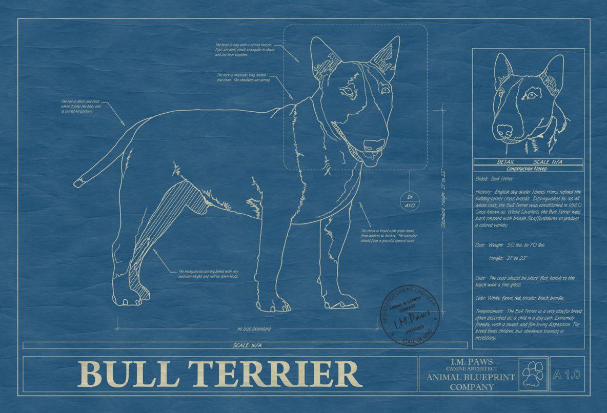 Bull Terrier Dog Blueprint