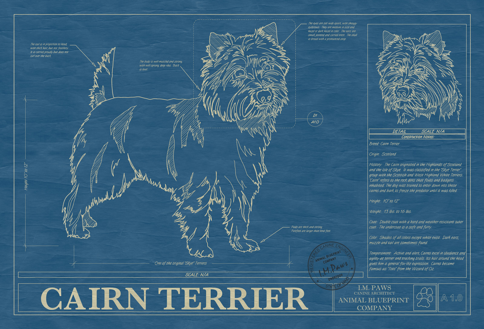Cairn terrier animal blueprint company cairn terrier dog blueprint malvernweather Gallery