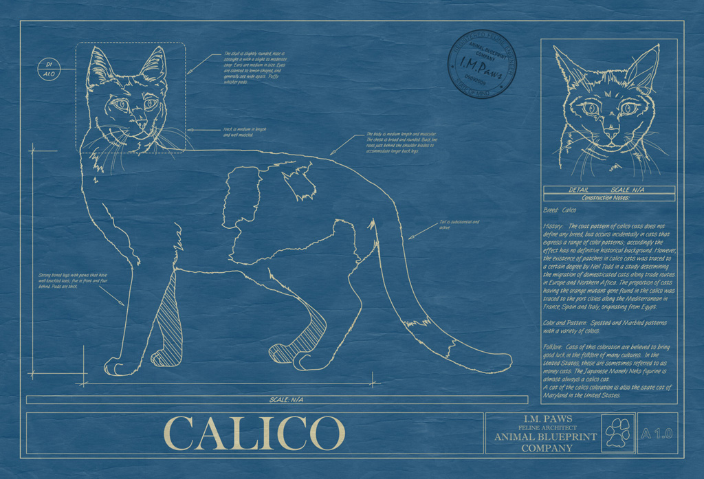 Calico Cat Blueprint
