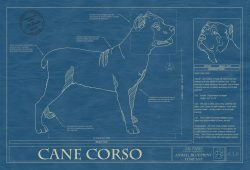 Cane Corso Dog Blueprint