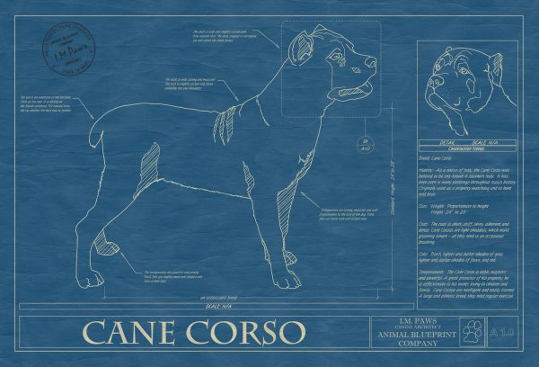 Cane Corso Dog Blueprint