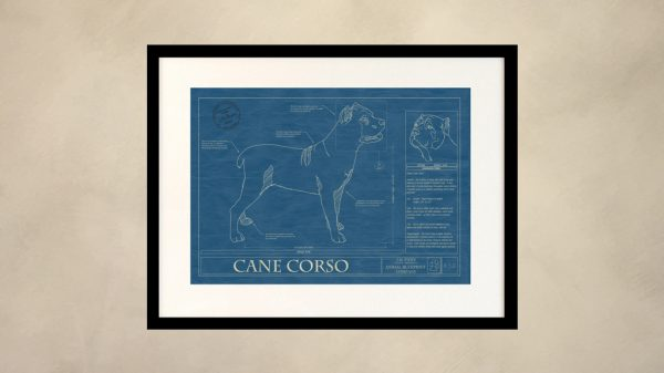 Cane Corso Dog Wall Blueprint