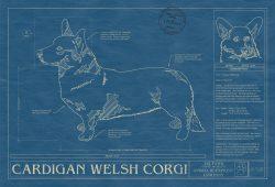 Cardigan Welsh Corgi Dog Blueprint