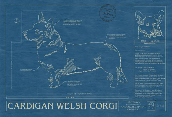 Cardigan Welsh Corgi Dog Blueprint